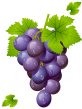 grape-with-leaves-clipart-picture
